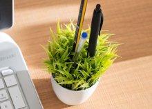 Fűszernövény kaspóban tolltartó
